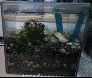 サブ水槽の写真です。