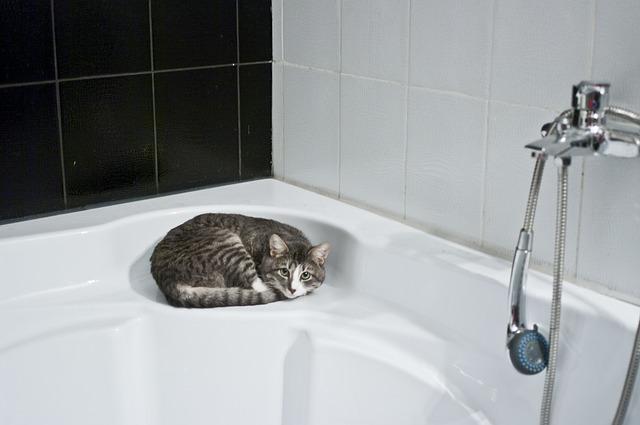 節水シャワーヘッドの効果 ①導入偏