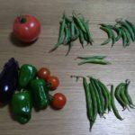 家庭菜園20170624 トマト赤くなった! ナス、ピーマン、キュウリもキテます