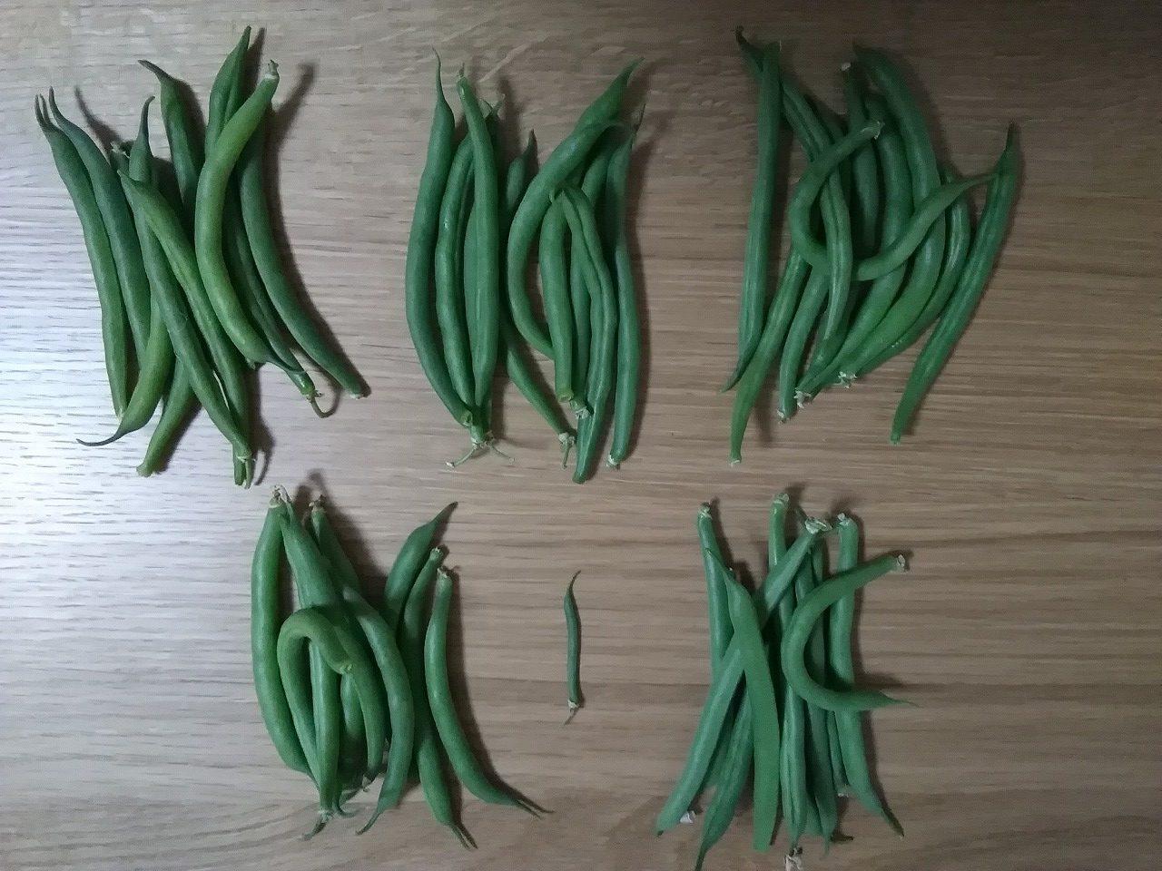 今日は「いんげん」祭りだぞ! なす、ピーマンも初収穫 家庭菜園20170603