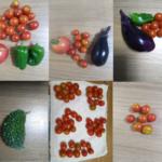 家庭菜園20170813  ミニトマトがたくさん採れます!