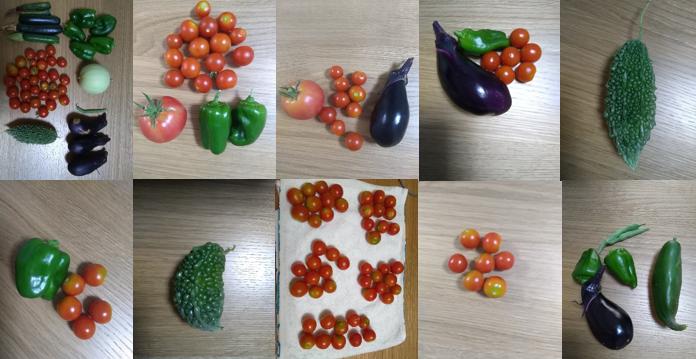 ミニトマトがたくさん採れます! 家庭菜園20170813